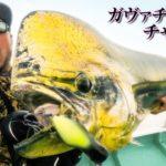 バス釣り用ルアーでデカすぎる魚を釣る!!