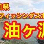 油ヶ淵 愛知県バスフィッシングスポット ブラックバス