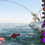 【Octopus fishing】世界最大種のタコが釣れた!