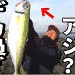 メディア史上最大!!ギガアジが大大大爆釣!!!