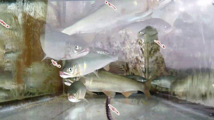 鮎釣り日記19 9 18