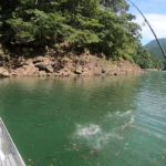 つりどうぐ一休リザーバー福山バス釣り動画【池原ダム】イマカツ、ジャバシャッドのノーシンカーリグで50アップがヒット!