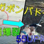 【バス釣り】琵琶湖 南湖東岸のおかっぱり 55up降臨!!トップウォーター(jackall MEGA POMPADOUR:ジャッカル メガポンパドール)でデカバス確保【第8話】
