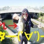【バス釣り】秋のデカバスはどこじゃ~!【ゆう作兄さんのチョイ釣りMAX】