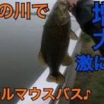 東京の川でスモールマウスバス釣り    都内バス釣り 川スモール