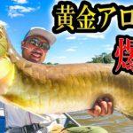 アマゾン川の奥地で黄金に輝く高級アロワナが釣れまくる方法を見つけた!【貴重映像】