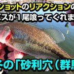 真冬のバス釣り!ダウンショットリグのリアクション【砂利穴(群馬)】