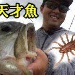超有名ポイントの天才魚に挑む!【遠賀川オカッパリ】