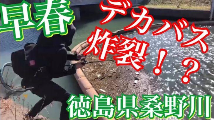 【バス釣り】早春の桑野川まさかのフル満水!!どうやって攻略するのか!?