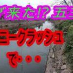 (バス釣り)五三川でタイニークラッシュに・・・