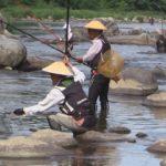 20センチ級の釣果、天然物も 愛好家らアユ釣り堪能