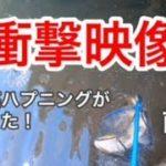 【釣り】衝撃映像、超巨大魚、川のヌシに挑戦!【前編】