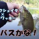 【バス釣り】川も春の到来か!?