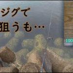 【大分県 釣り】100均ジグでライトショアジギングするも…やっぱり根魚狙う。【青物釣り・カサゴ釣り】