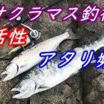 海サクラマス釣行2020⑨アタリ頻発、3連勝!
