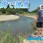 釣り。鮎毛鉤で雑魚。川の小物釣り26。 琵琶湖 淡水魚 Fishing