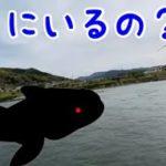 海にいるはずの魚が川で釣れちゃった!【びっくり】