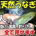 東京の川で天然うなぎ釣りをしたら良型が連発!名人直伝の鰻釣りの全てがこの動画にあり