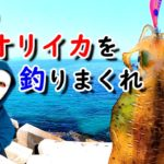 【エギング】アタリを取って春イカを釣りまくれ!シャローで狙うアオリイカ【藻場攻略】