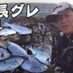 串本で尾長グレが釣れたので惜しげもなく公開します