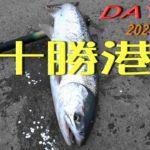 2020年 ★アキアジ釣り第2日目スタート★ ★アタリからネットインまでの完全映像★ 釣り人は殺気を消し、魚の気配を感じ取れ 伝家の宝刀必殺鬼合わせで釣れました。