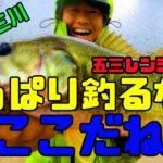 【五三川】久しぶりにこのポイント行ったらやっぱり釣れた!【バス釣り】.