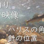 【鮎釣り】【水中映像】ハリスの角度はどうなっているの?ハリスの長さは?