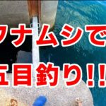 【フナムシ】で五目釣り!?夕方の1時間で5種目釣れるのか⁉【ヘチ釣り】【チヌ釣り】