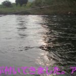 2020年8月6日 木曜日  エルクの 米代川・鹿角・比内・鮎釣りブログ