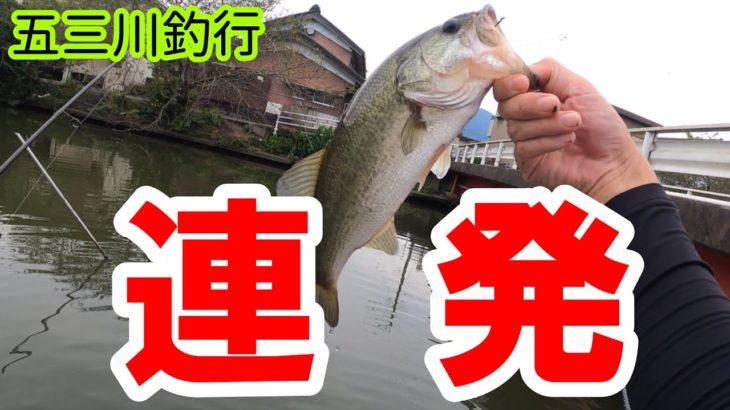 【バス釣り】噂のルアーは五三川でやはり爆釣した【五三川】