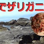 【湯河原】福浦漁港と裏の磯でザリガニ餌使ってフカセ釣りモドキ