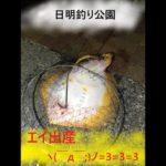 日明釣り公園(福岡県)勝手にPR【よかよかチャンネル】