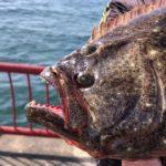 【平磯海釣り公園】秋の釣果は最高潮へ!fishingmax垂水店2020/10/31
