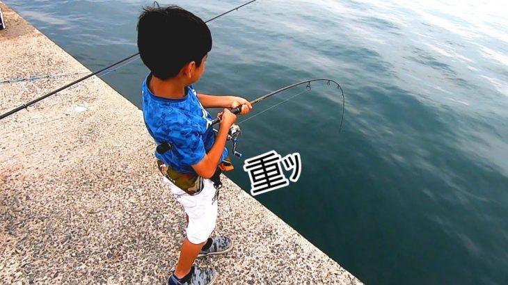 秋の堤防で旬の魚が大漁!泳がせ釣りにまさかの展開が❕❕