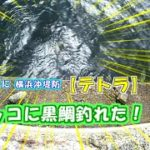 【横浜沖堤防】初めて渡ったテトラは魚天国だった!