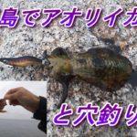淡路島で穴釣りとエギング