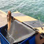 再びちょい投げスポットへやってきました!小物釣りになって楽しかった!【宮城県】【堤防釣り】