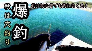 【穴場】知多半島のとある堤防で爆釣!今秋の穴釣りが熱すぎる!テトラがあっても無くても出来る【初心者必見】最後に恒例のおまけ有り
