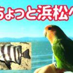 ちょっと浜松へ釣り🎣【ちょい悪インコ】新居海釣公園 CHOIWARU INKO