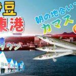 【静岡県伊東港】カマス・イナダが爆釣しているという噂を聞いて人気堤防へ行ってみた!&マリンタウン【Japan Fishing Barracuda】