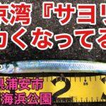 【サヨリ堤防釣り】東京湾サヨリ釣りハイシーズン‼デカイやろ‼