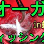 銚子で堤防釣り?しょうもない釣り動画ですw認めますw【オーガ社長のオガチャンネル】