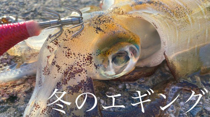 【エギング】冬のアオリイカを探してランガン釣法 愛媛県宇和島市