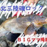 【北三陸】磯ロックでBIGママ出現…!ハイシーズンの魚はヤル気満々!(前編)