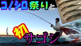 堤防釣り コノシロ祭りと初サゴシGET!