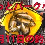とっとパーク小島 のませサビキで【アジ】釣れました!