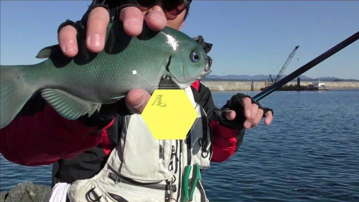 地磯でフカセ釣りしてきました。#釣り#フカセ#グレ釣り#五目釣り#南紀#地磯