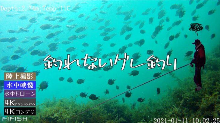 【水中映像】地磯のグレ釣り【ボ〇ズ】