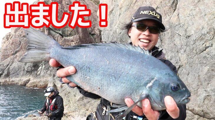 とうとう出ました大型グレ!   大分県深島でグレシーズンの磯釣り