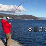 今シーズンの最大魚が釣れました。(伊東港 泳がせ釣り 堤防から鰤 カマス)